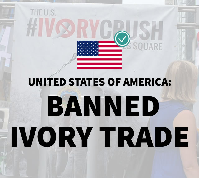 United States of America: Banned Ivory Trade