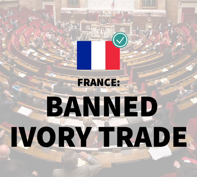 France: Banned Ivory Trade