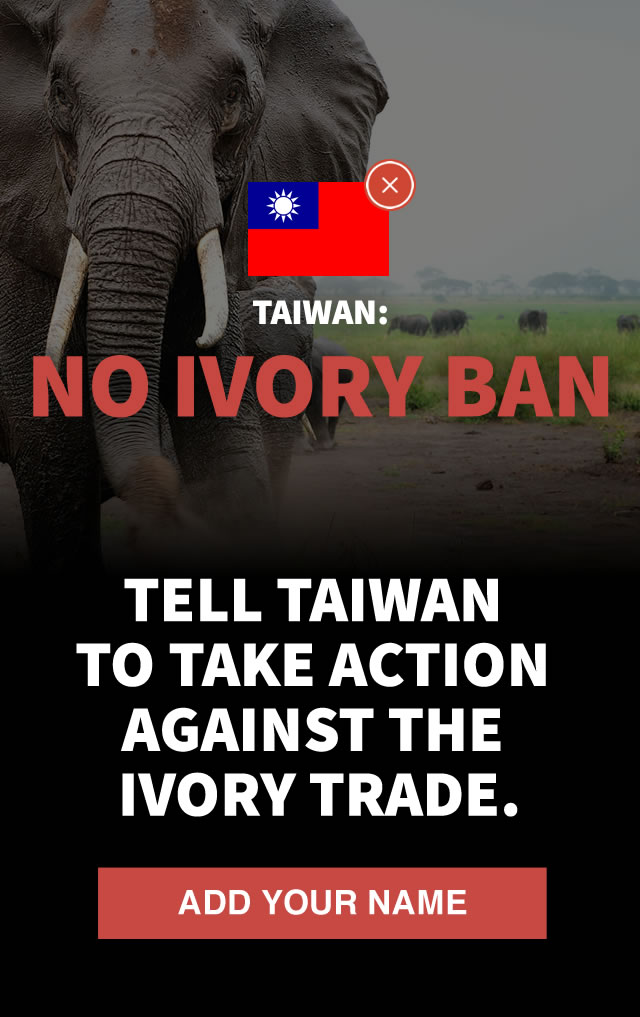 Taiwan: No Ivory Ban. Tell Taiwan to take action against the ivory trade.